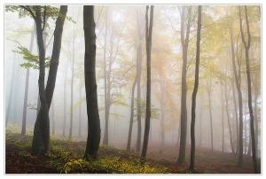 autumn-194834_640-Alois_Wonaschuetz