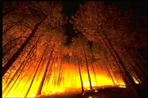 wildfire-photo-skeeze